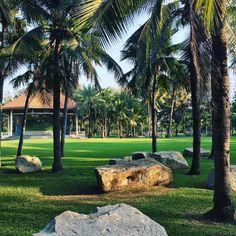 БЛОГИНГ | ПРОДВИЖЕНИЕ БЛОГА в Instagram: «Красивый вид в парке Люмпини. От Бангкока остались смешанные чувства, но что касается парка, то это место классное. Самое лучшее место для…» Bangkok, Golf Courses, Sidewalk, Plants, Side Walkway, Walkway, Plant, Walkways, Planets