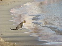 "magical-meow: ""Looking at the sea by P. León on Flickr. """