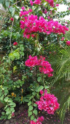 Veranera mi jardín=vida