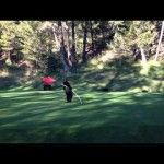 Baby Bear Plays on Golf Course, Then Steals Ball At Fairmont Hot Springs Resort, BC [VIDEO]