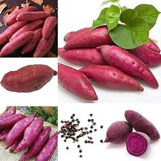 Amazon.com : 50pcs0pcs/50pcs Sweet Potato Seeds Garden Delicious Fresh Fruits Vegetables ok 01 : Garden & Outdoor Sweet Potato Plant, Fruit Bio, Potato Gardening, Growing Sweet Potatoes, Legume Bio, Cool, Eggplant, Carrots, Vegetables