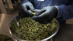 Cannabis sector resumes selloff as investors shrug off bullish Canopy note - MarketWatch Cannabis Seeds Online, Cannabis Seeds For Sale, Cannabis Plant, Cannabis News, Cannabis Oil, Medical Marijuana, Growing Marijuana Indoor, Investors