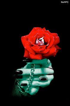 la rosa k me regalastes  se marchito xk el sol ya no se le como antes cuand0 y0 +e konoci pow