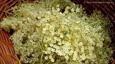 ... działa napotnie i wzmacnia układ odpornościowy. Z dodatkiem wody staje się przepysznym i zdrowym napojem. Jak zrobić syrop z kwiatów czarnego bzu?