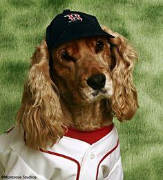 Cocker Spaniel #DogsinClothes