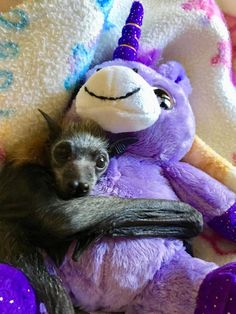 Aww a baby Bat feels more secure with someone to hold on to. Don't we all.