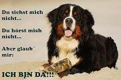 Bildergebnis für Bernersennen Hunde Motive