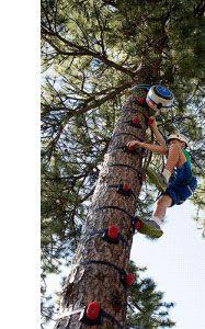 Arboreal Tree Climbing System