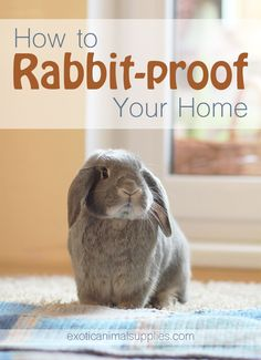 How to Rabbit Proof Your Home – Rabbit cages- Rabbit cages, Bunny cages, Pet bunny, Pet rabbit care, Diy Bunny Cage, Bunny Cages, Rabbit Cages, House Rabbit, Cages For Rabbits, Pet Bunny Rabbits, Pet Rabbit, Bunny Bunny, Giant Bunny