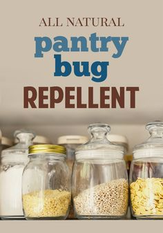 All Natural Pantry Bug Repellents - Five Spot Green Living Pantry Moths, Insect Repellent, Food Containers, Pest Control, Organic Gardening, Cleaning Hacks, Cleaning Solutions, Bugs, Natural