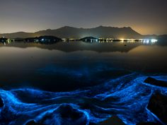 Noctiluca scintillans commonly known as the sea sparkle is a free-living nonparasitic marine-dwelling species of dinoflagellate that exhibits bioluminescence when disturbedhttps://static-ssl.businessinsider.com/image/566ed7152340f8b8008b5621-1225-919/screenshot2015-12-14at9.48.33am.png