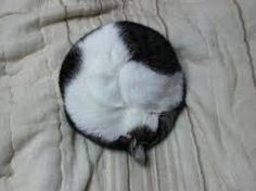 Image result for cat curled up
