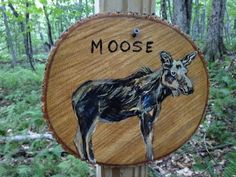 Insect's 2015 The Long Trail - Vermont Photos : My Moose