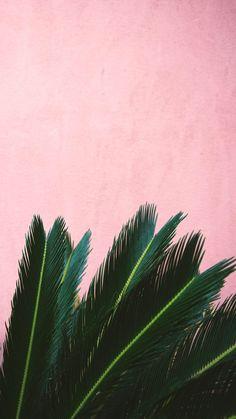 Pin by skyzbelll on plants leaves wallpaper iphone, iphone wallpaper, palm Leaves Wallpaper Iphone, Plant Wallpaper, Phone Wallpaper Images, Tumblr Wallpaper, Aesthetic Iphone Wallpaper, Screen Wallpaper, Aesthetic Wallpapers, Wallpaper Backgrounds, Flower Wallpaper