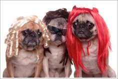 50 Hilarious Dogs In Wigs