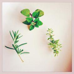 Junko H Beyersさんが投稿した画像です。他のJunko H Beyersさんの画像も見てませんか? おすすめの観葉植物や花の名前、ガーデニング雑貨が見つかる!GreenSnap(グリーンスナップ)