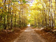 Pigeon River State Forest - Wolverine, MI. I took this last fall down the road from our cabins :) Looove it here!