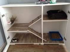 Mad Marley's custom made house after two long years at the rescue centre.