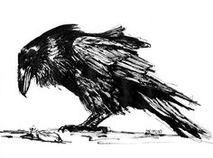 gesture drawing of birds - Google Search