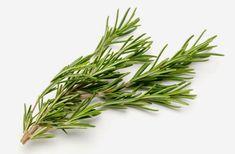 Elixir de alecrim e sálvia é excelente para memória e cansaço mental | Cura pela Natureza