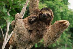 Amazing Amazon   Animal National