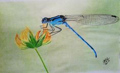 Desenho realista feito com lápis de cor por Carol Soares / Realistic draw made with color pencil by Carol Soares  #realisticpainting #dragonfly #animals #AlmaDasCores