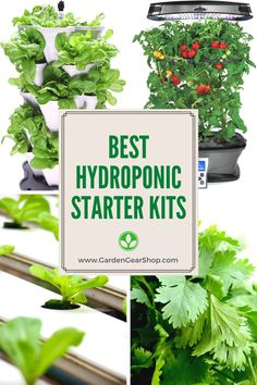 Fascination About Hydroponics
