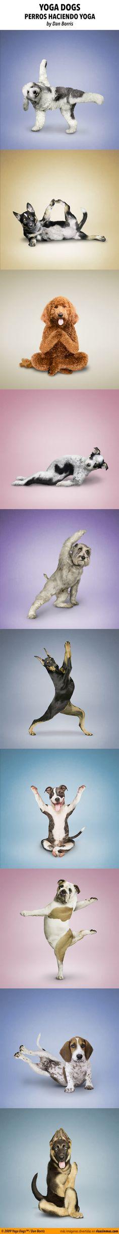 Yoga dogs, perros haciendo yoga.  © 2009 Yoga Dogs™ / Dan Borris