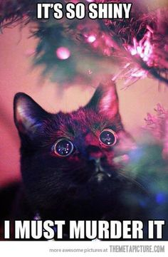 We will see how our Christmas tree fares this year with Toulouse in the house...