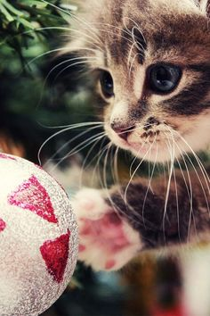 This is why you don't put the breakable ornaments on the lowest branches of the tree. What a cutie!