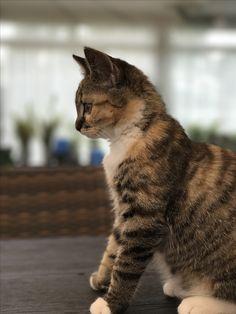 Aug 2017 Cute Cats, Kitty, Sun, Animals, Adorable Kittens, Kawaii Cat, Animales, Kitten, Animaux