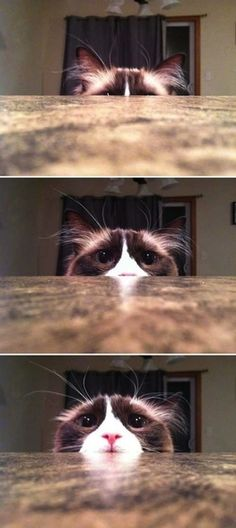 This cat who might tell you about what he's seen if you meet him outside after dark.