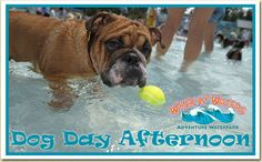 Dog Day Afternon at Whirlin Waters Sun. Sept 13th from noon -5pm.   Humans are Free:)