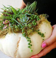 Succulents in the pumpkin