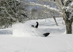 Powder turn in the trees.