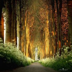 Tree Tunnel, Netherlands. I want to go there! Looks like something out of Tolkien's Lord of the Rings!
