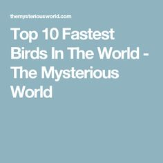 Top 10 Fastest Birds In The World - The Mysterious World