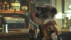 Vassily Meerkat Profile - More About Vassily | Compare The Meerkat