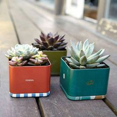 Fossil tin planters!