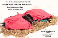 GLA photo exhibit poster Photo Exhibit, Great Photographers, Great Lakes, Sled, My Images, Marathon, Life Is Good, Aquarium, Dogs