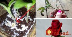 Pomôže zakoreniť, odstráni pleseň a udrží ich dlho krásne: Túto vec používate celkom inak, pre vaše rastlinky je však cennejšia, ako zlato!