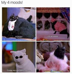 """Amusing Sh*tposts From Every Corner Of The Internet Memes) - Funny memes that """"GET IT"""" and want you to too. Get the latest funniest memes and keep up what is going on in the meme-o-sphere. Salem Cat, Salem Saberhagen, Nerd, Comic, Queen, Spirit Animal, Laugh Out Loud, The Funny, My Idol"""