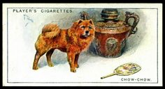 Cigarette Card - Chow-Chow