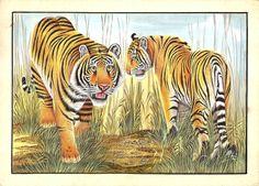 Bengal Indian Tigers