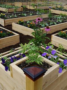 Amazing ideas for raised beds that even I can tend!