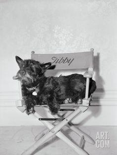 Bette Davis's Dog Tibby Photographic Print at Art.com