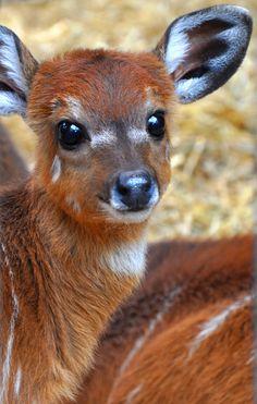 Bambi :)