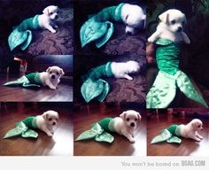 A little mer-puppy! Awe, so cute. http://media-cache2.pinterest.com/upload/59039445085138566_WVTstqjE_f.jpg mpulverm sweethearts