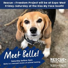 Meet Belle TODAY! Southern California! Rescue + Freedom Project will be at Natural Products Expo at the Kiss My Face booth today!  You can meet Belle before 2PM! Hall C booth 2604. #beagle #dogs #cats #necklaces #keychains #anklets #jewelry