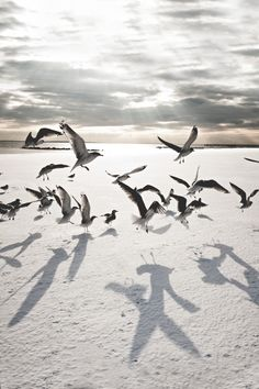 ~ Navid Baraty, Winter on Coney Island Best Picture For Birds Photography winter For Your Taste You Nicolas Vanier, Am Meer, Coney Island, Beach Photography, Photography Photos, Yin Yang, Beautiful Birds, Beautiful Places, Seaside